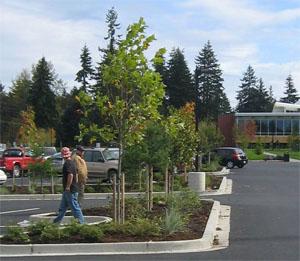 Peninsula College Parking Lot Sustainable Retrofit